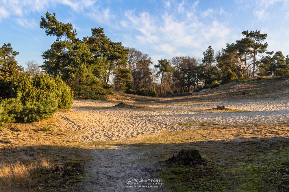 Photo in Landscape #boshuizerbergen #venray #boschhuizerbergen #limburg #noord-limburg #woods #netherlands #dunes #pine #path #spring #sand