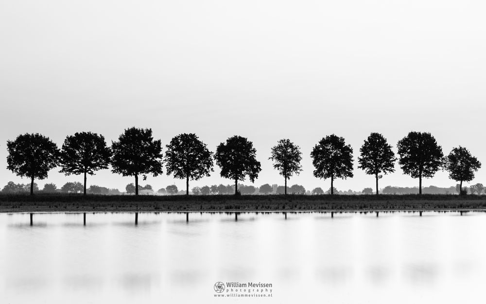 Photo in Black and White #forest #woods #heathland #maasduinen #limburg #noord-limburg #nieuw-bergen #bergen #national park #nature #light #land #trees #ceresweg #eckeltsebergen #twilight #fen #reflections #mirror #le #long exposure