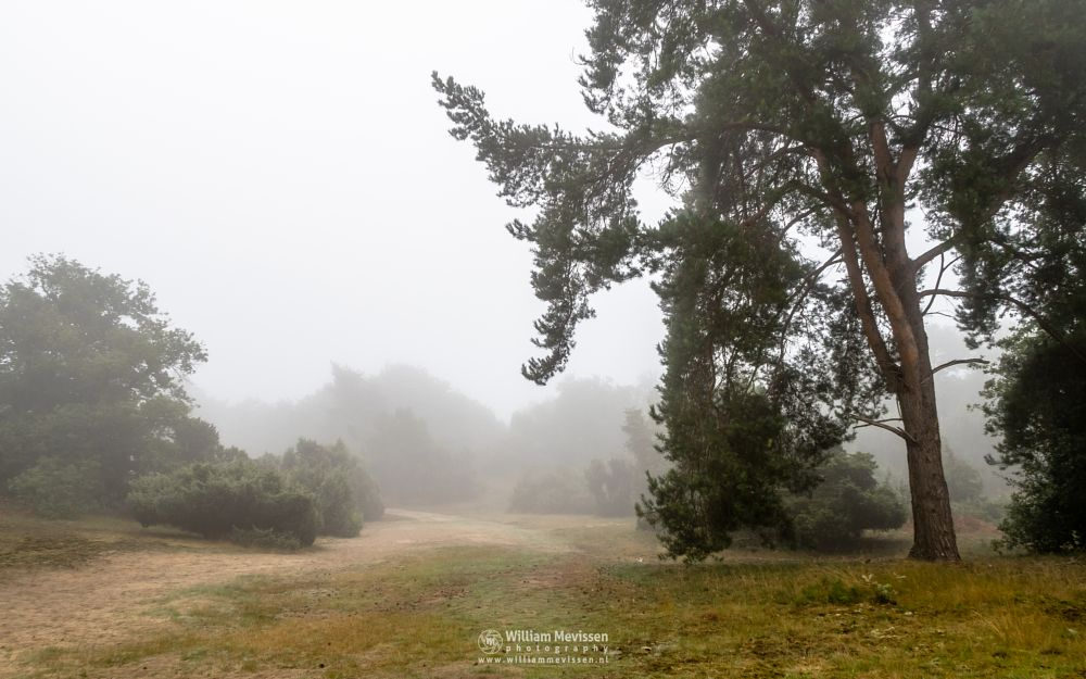 Photo in Nature #boshuizerbergen #boschhuizerbergen #limburg #noord-limburg #venray #nature #woods #limburgs landschap #netherlands #juniper #shiftingsand #thickets #mist #fog #path