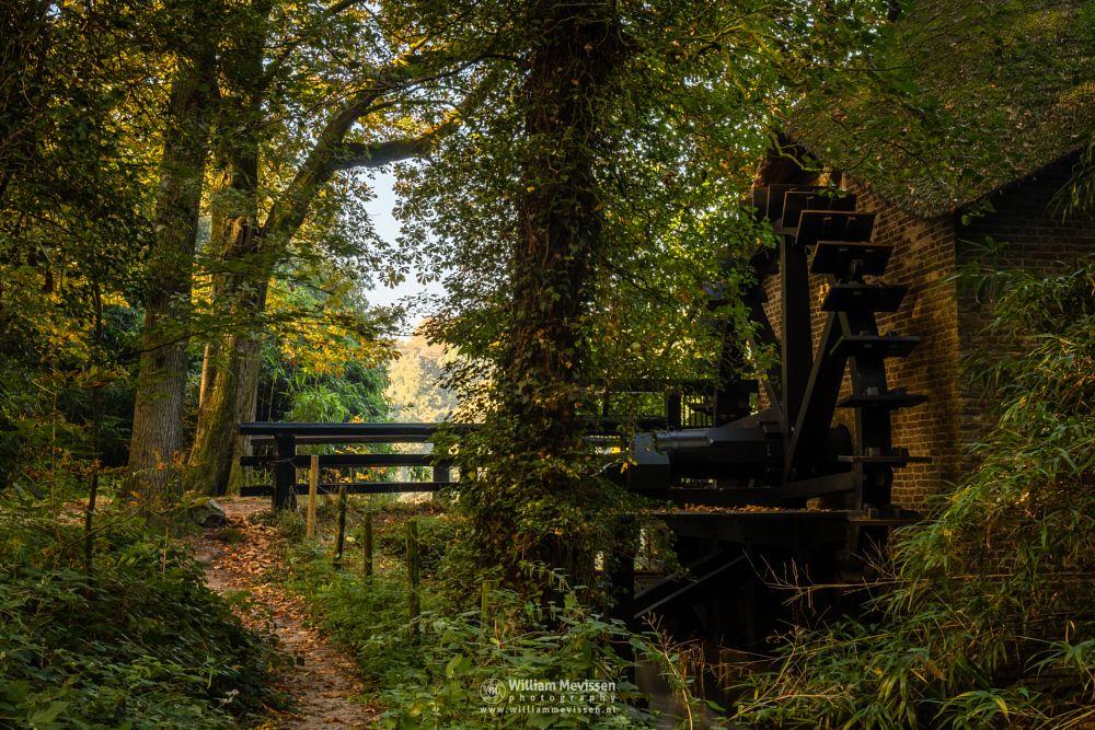 Photo in Nature #geijsteren #venray #oostrum #landgoed geijsteren #landgoed #limburg #noord-limburg #nature #nature reserve #forest #woods #geysteren #light #tree #trees #path #green #mist #fog #rosmolen #watermill #watermolen