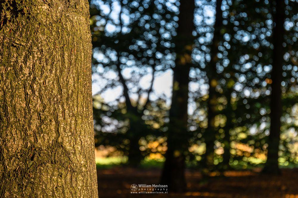 Photo in Nature #venray #limburg #noord-limburg #merselo #nature #tree #trunk #autumn #bokeh #forest #woods