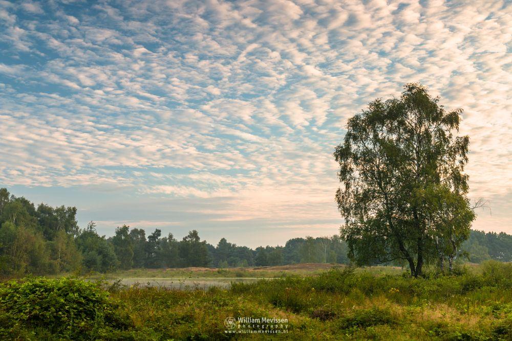 Photo in Landscape #bergerheide #forest #woods #maasduinen #limburg #noord-limburg #nieuw-bergen #bergen #nature #tree #birch #rondven #fen