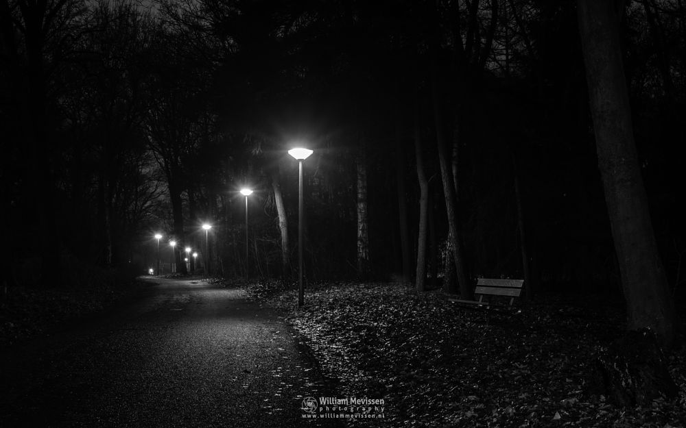 Photo in Black and White #mist #limburg #noord-limburg #annaterrein #venray #nature #heritage #forest #bench #stepke #night #trees #streetlight
