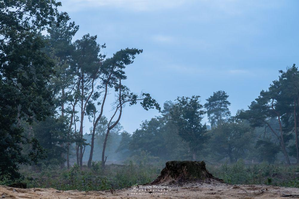 Photo in Random #limburg #forest #woods #netherlands #shiftingsand #dunes #thickets #mood #fog #mist #trunk #nature #noord-limburg #boschhuizerbergen #boshuizerbergen #venray #juniper