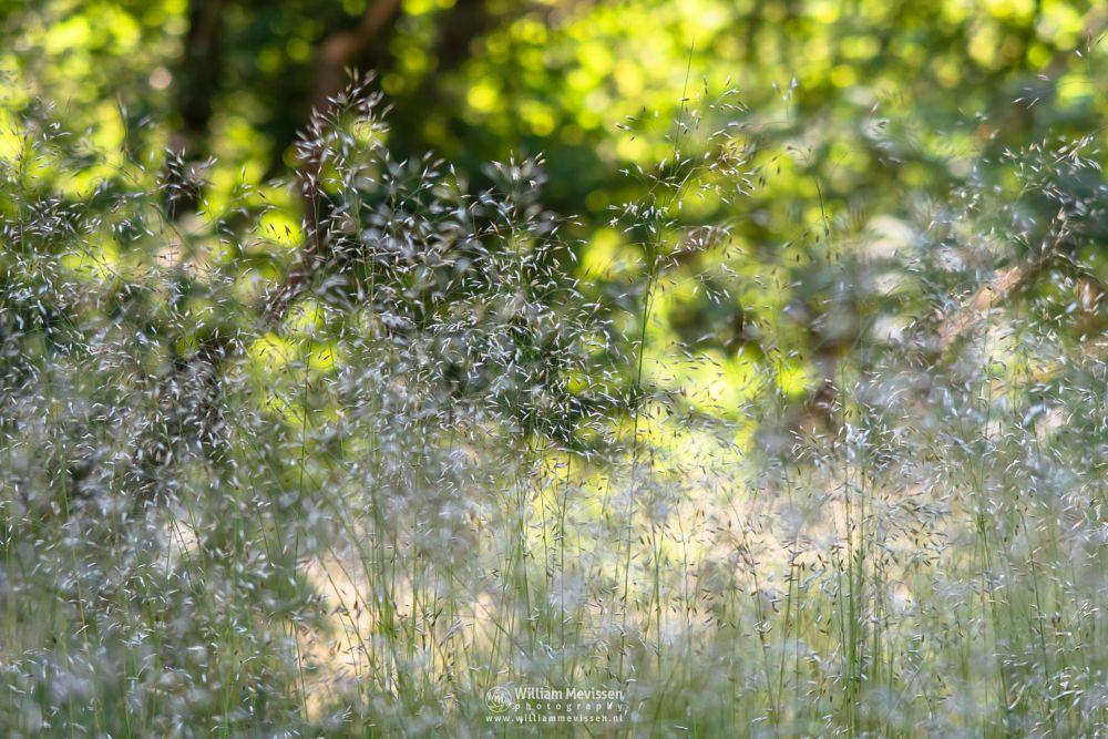 Photo in Nature #odapark #nature #limburg #noord-limburg #venray #nature forest #art #path #trees #spring #park #bokeh