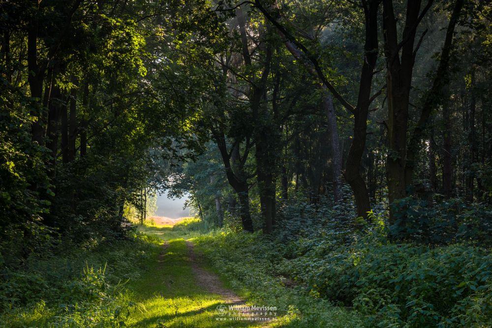 Photo in Nature #hdr #boshuizerbergen #boschhuizerbergen #limburg #noord-limburg #venray #nature #nature reserve #forest #woods #limburgs landschap #netherlands #pine #pine forest #sunrise #light #rays #landgoed geijsteren #path #beams #leaves #sunlight