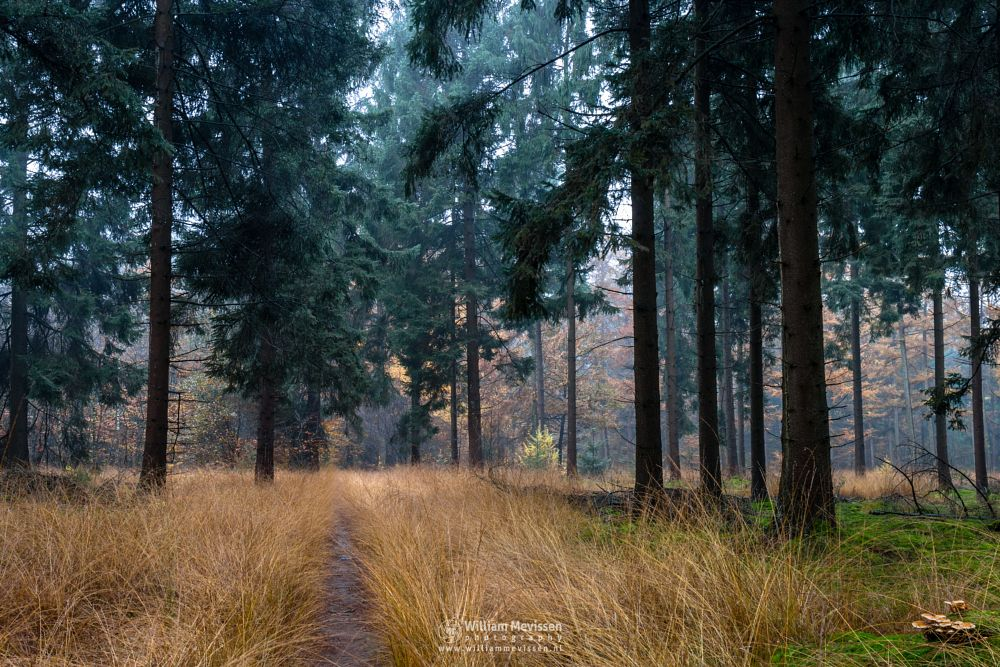 Photo in Nature #venray #merselo #overloon #forest #ballonzuil #limburg #noord-limburg #nature #nature reserve #ballonzuilbossen #woods #ballonzuilbos #autumn #tree #trees #path #grasses