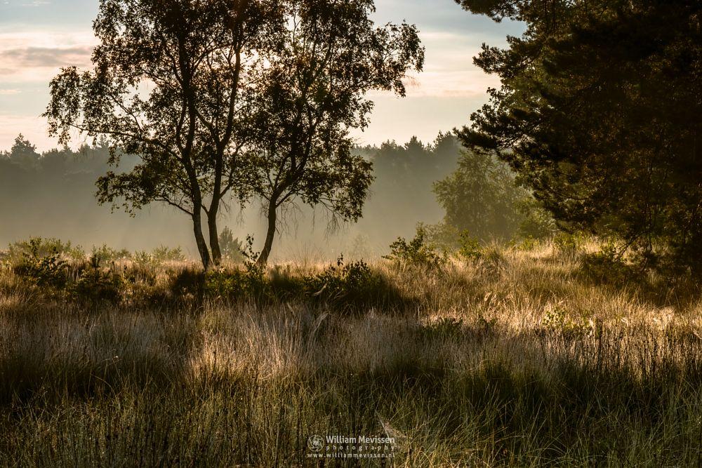Photo in Nature #ravenvennen #lomm #woods #limburg #noord-limburg #arcen #nature #nature reserve #forest #velden #netherlands #venlo #fen #sunrise #swamp #mood #silhouette #silhouettes #trees #tree #fens #sunrays #rays #beams #grasses #sunlit