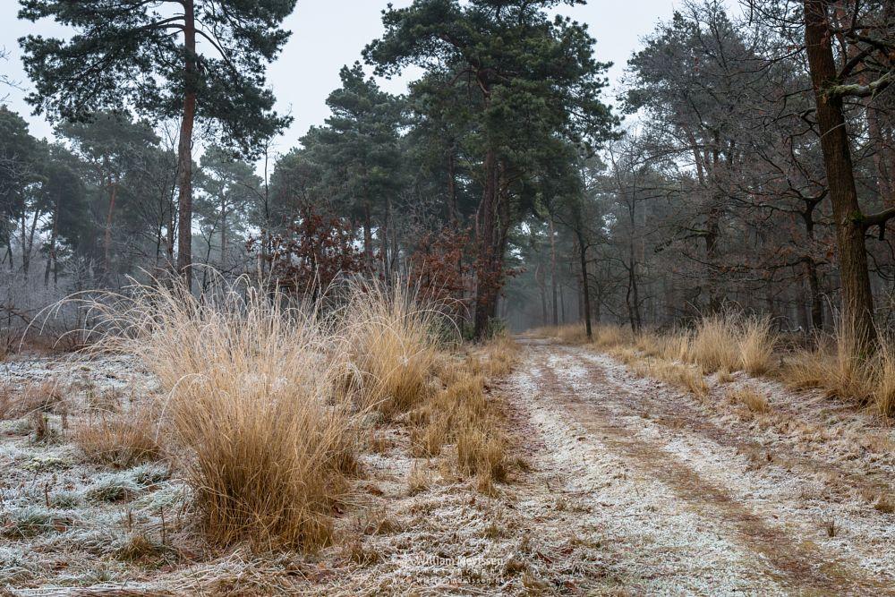 Photo in Nature #boshuizerbergen #boschhuizerbergen #limburg #noord-limburg #venray #nature #forest #netherlands #path #frost #grasses #winter