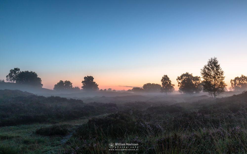 Photo in Random #eckeltsebergen #eckeltse #heather #blooming #purple #pink #mist #fog #maasduinen #limburg #noord-limburg #nieuw-bergen #bergen #nature #light #twilight #dunes #sunrise #mood
