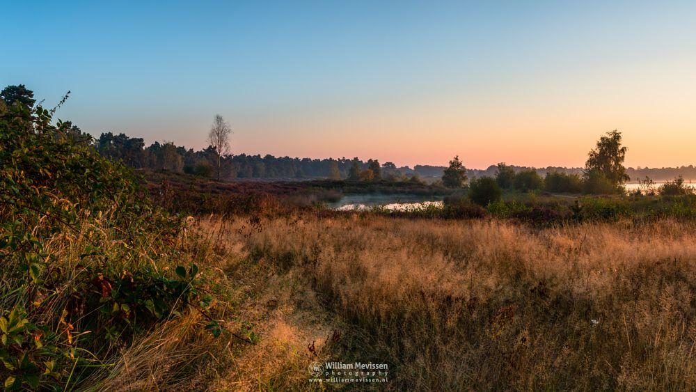 Photo in Landscape #trees #forest #lake #reindersmeer #maasduinen #limburg #noord-limburg #well #national park #nature #sunrise #colors #light #serene #view #mist #mood #goldenhour #pano #panorama
