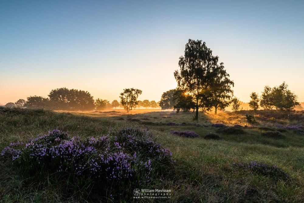 Photo in Landscape #eckeltsebergen #eckeltse #heather #blooming #purple #pink #mist #fog #maasduinen #limburg #noord-limburg #bergen #nieuw-bergen #nature #light #trees #mood #sunrise #dunes