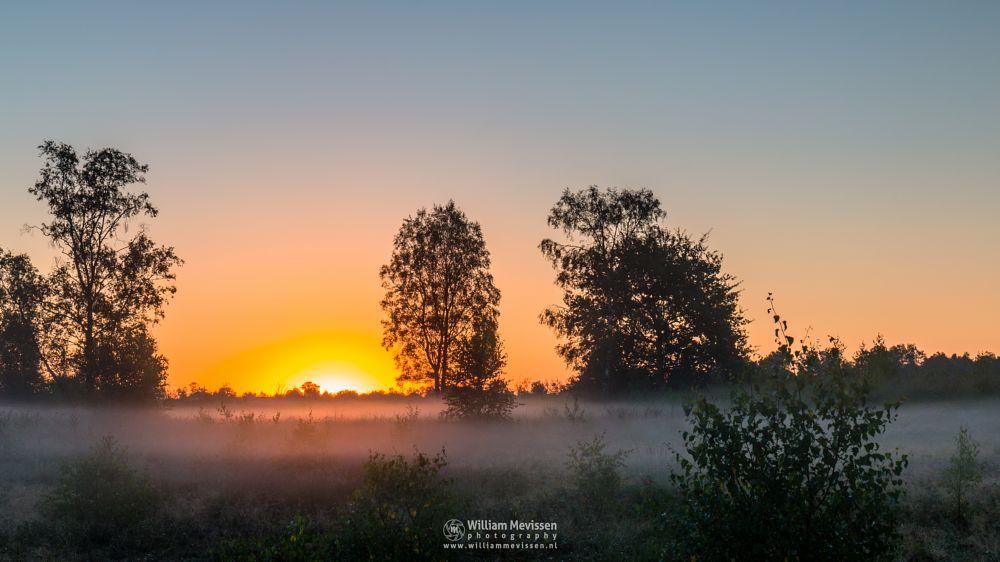 Photo in Landscape #forest #woods #heathland #maasduinen #limburg #noord-limburg #wellerlooi #bergen #national park #nature #light #land #trees #sunrise #heather #mist #misty #fog #foggy