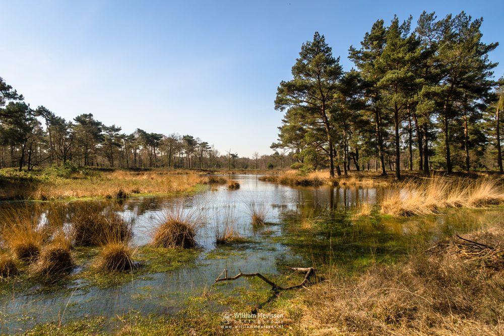 Photo in Landscape #ravenvennen #lomm #limburg #velden #venlo #nature #noord-limburg #forest #fen #serene #grasses #spring #trees #wood #branches #golden #grass #reflections #serenity