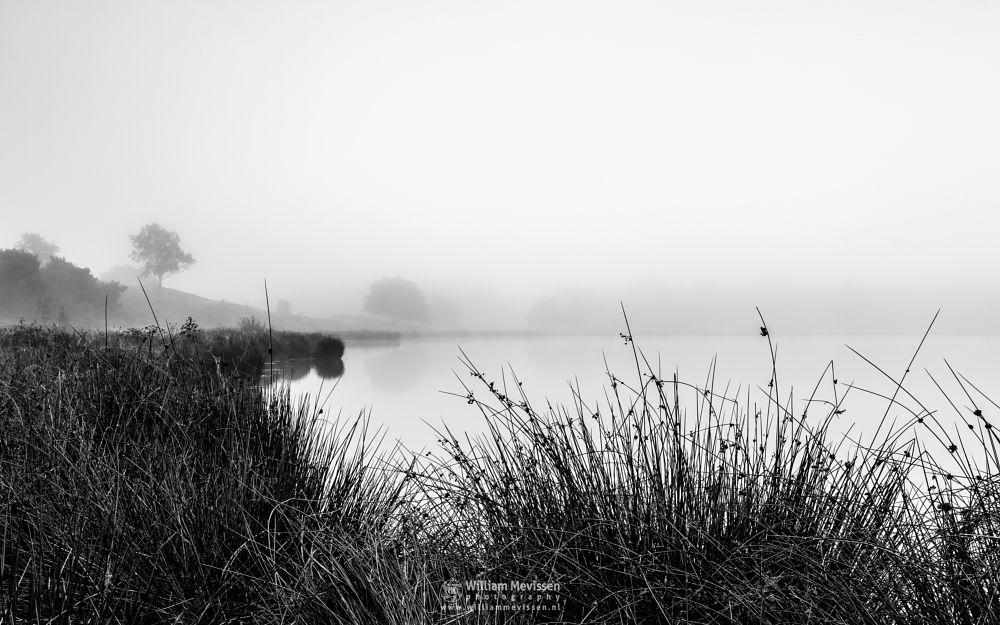 Photo in Black and White #bergerheide #forest #maasduinen #dunes #tree #fog #mood #mist #bergen #nature #nieuw-bergen #limburg #noord-limburg #driessenven