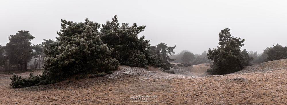 Photo in Landscape #boshuizerbergen #boschhuizerbergen #limburg #noord-limburg #venray #nature #winter #mist #juniper #sanddunes #panorama #pano