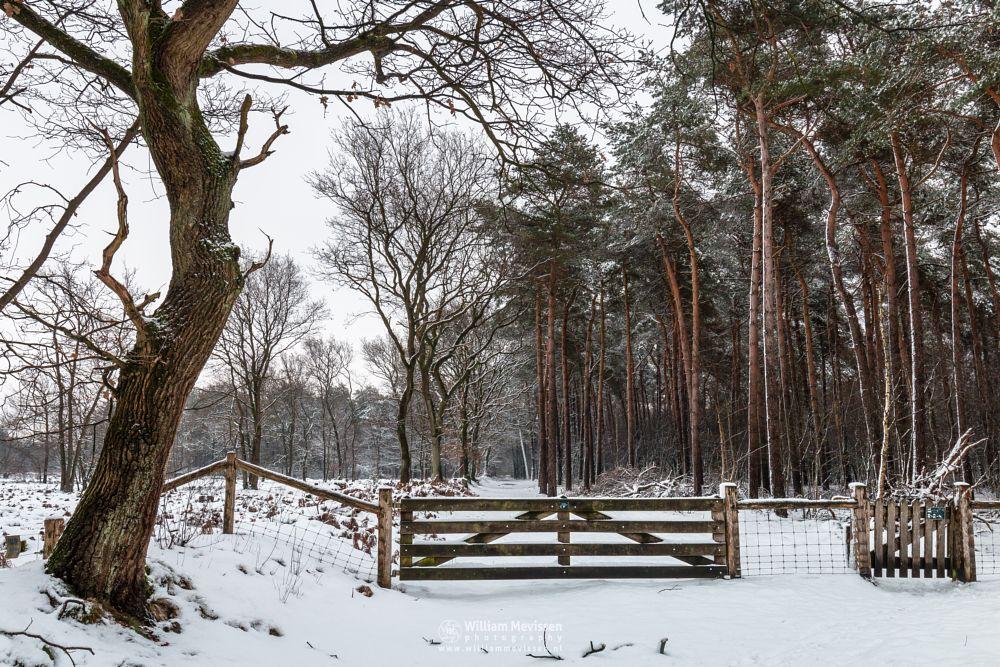 Photo in Nature #boshuizerbergen #boschhuizerbergen #limburg #venray #nature #woods #forest #snow #winter #winterlandscape #noord-limburg #trees #gate #netherlands