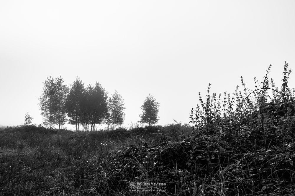 Photo in Black and White #sunlight #lelieven #blackandwhite #nature #bergen #mist #mood #limburg #bergerheide #trees #maasduinen #noord-limburg #nieuw-bergen #fen
