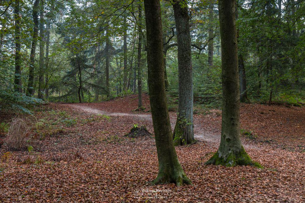 Photo in Nature #geijsteren #venray #oostrum #landgoed geijsteren #estate #landgoed #limburg #noord-limburg #nature #nature reserve #forest #woods #geysteren #path #autumn