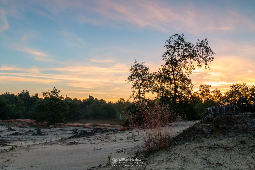 Photo in Nature #boshuizerbergen #boschhuizerbergen #limburg #noord-limburg #venray #nature #nature reserve #forest #woods #sand #shifting sand #limburgs landschap #colors #netherlands #pine #pine forest #sunrise #light #sunlight #colorful #silhouettes