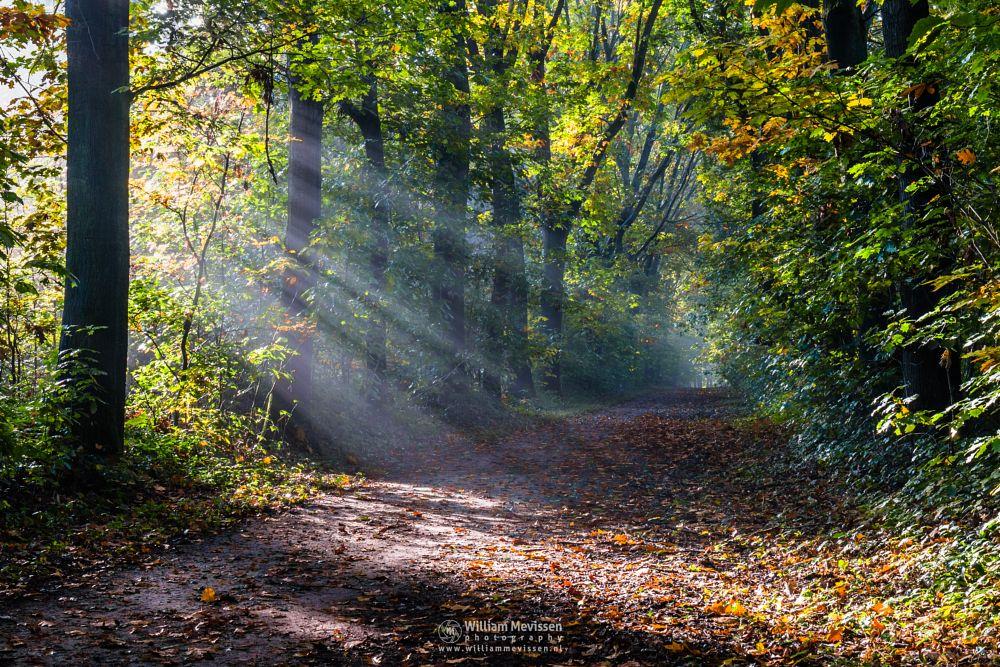 Photo in Nature #geijsteren #venray #oostrum #landgoed geijsteren #limburg #noord-limburg #nature #forest #autumn #trees #rays #lightrays #beams #foliage