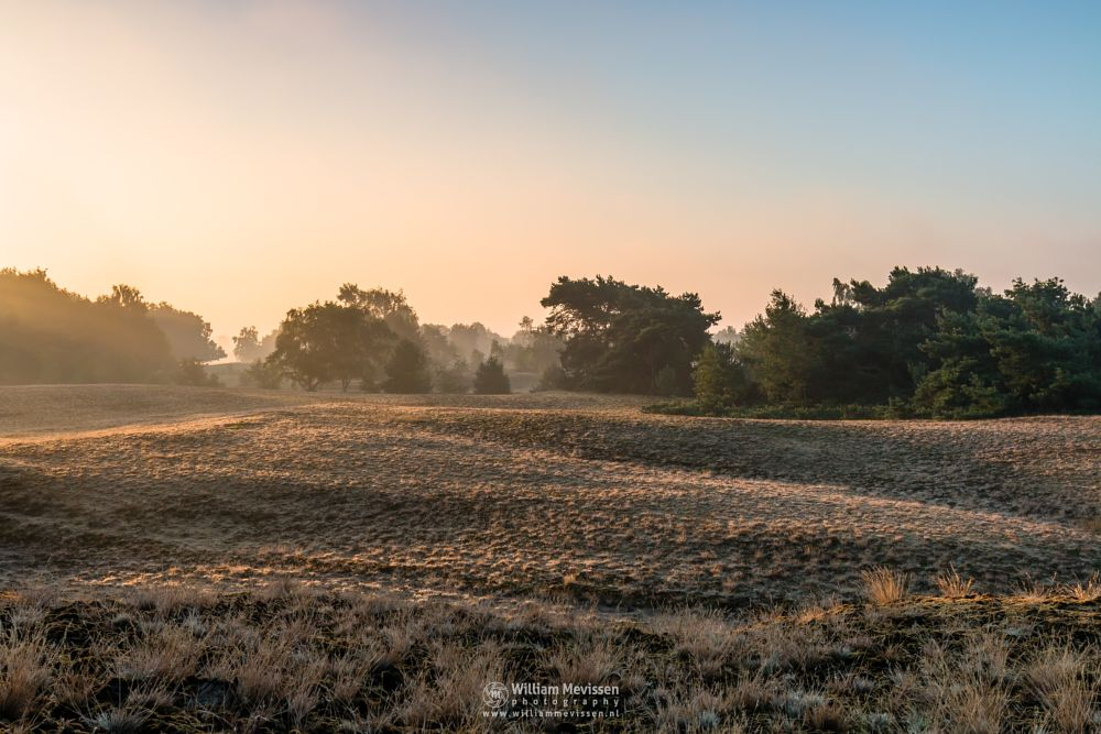 Photo in Landscape #bergerheide #forest #woods #maasduinen #limburg #noord-limburg #nieuw-bergen #bergen #nature #light #goldenhour #trees #summer #mist #mood #sunrise #dunes