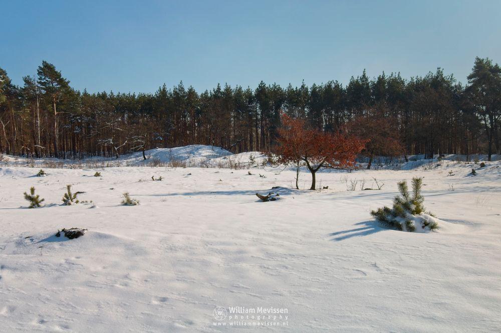 Photo in Landscape #snow #landscape #tree #autumn #boshuizerbergen #venray #limburg #noord-limburg #nature