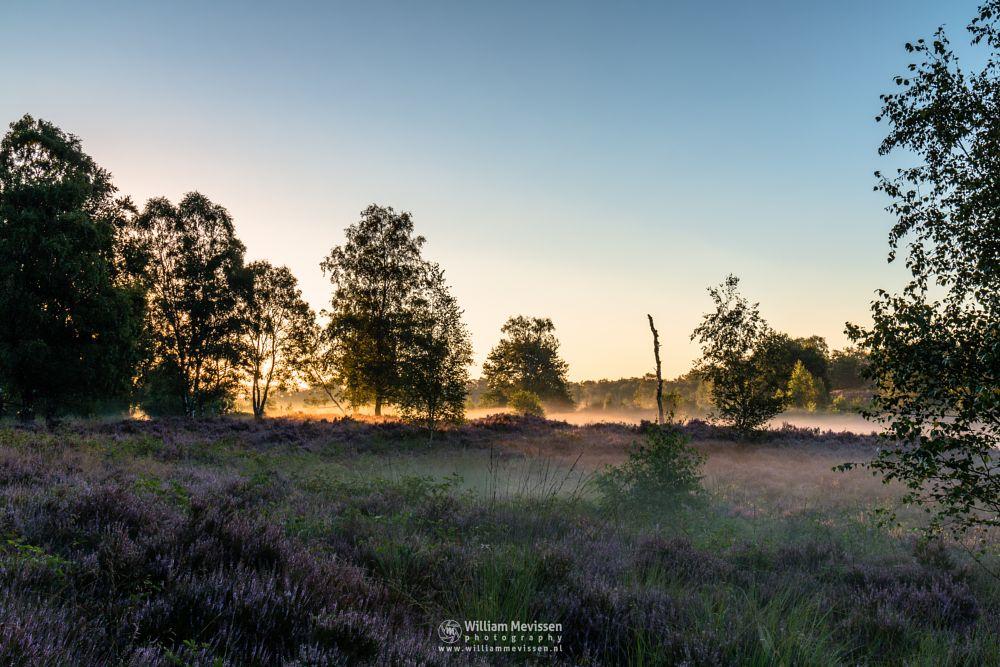 Photo in Landscape #forest #woods #bergen #heathland #maasduinen #limburg #noord-limburg #wellerlooi #national park #nature #light #land #trees #sunrise #heather #mist #misty #fog #foggy #purple #blooming