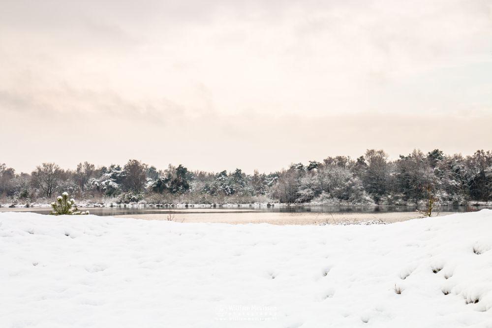 Photo in Landscape #bergerheide #nieuw-bergen #noord-limburg #driessenven #snow #sunrise #sunlight #bergen #winter #light #nature #maasduinen #limburg #forest