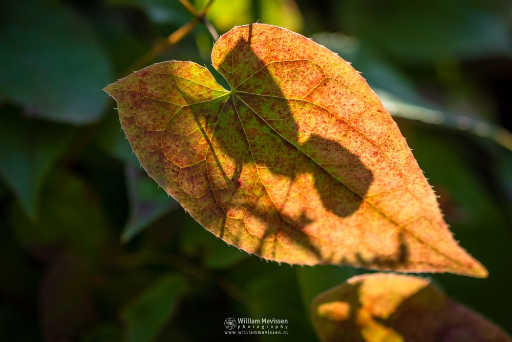 Photo in Macro #autumn #colors #foliage #nature #red #green #yellow #leaves #tree #shadows