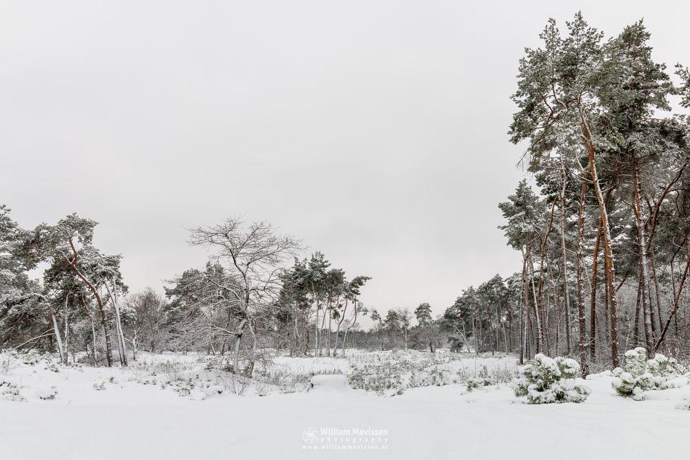 Photo in Landscape #boshuizerbergen #boschhuizerbergen #limburg #venray #nature #noord-limburg #forest #netherlands #shiftingsand #thickets #juniper #dunes #snow #winter #winterlandscape #winterscape #trees #woods