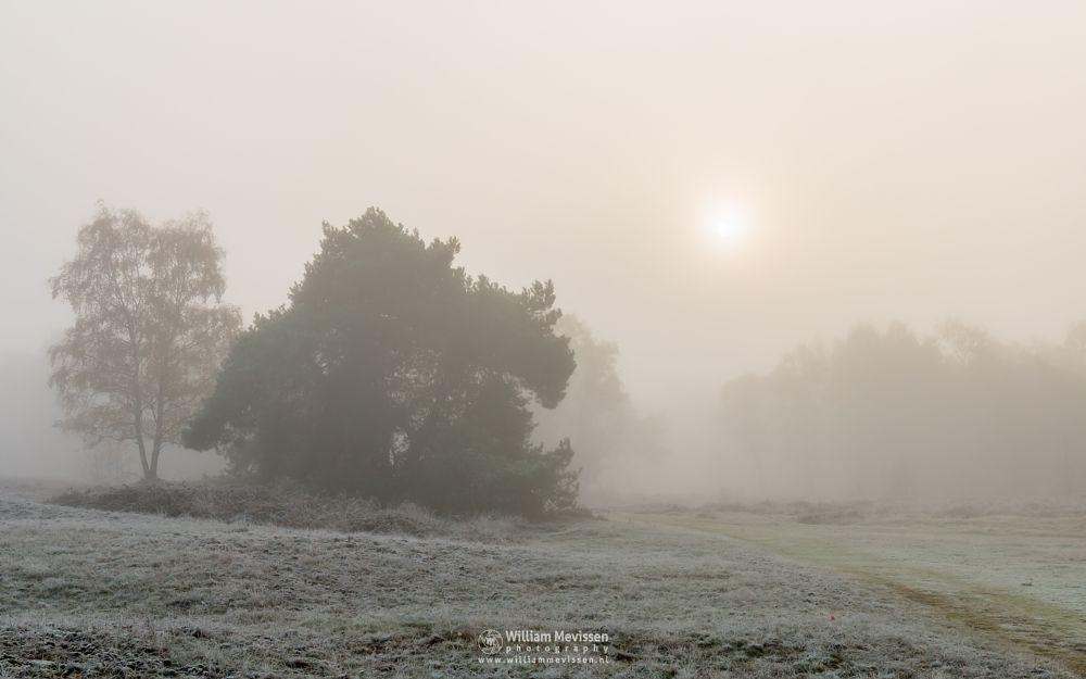 Photo in Landscape #bergerheide #forest #limburg #noord-limburg #bergen #nieuw-bergen #autumn #frost #sunrise #sun #mist #mood #maasduinen