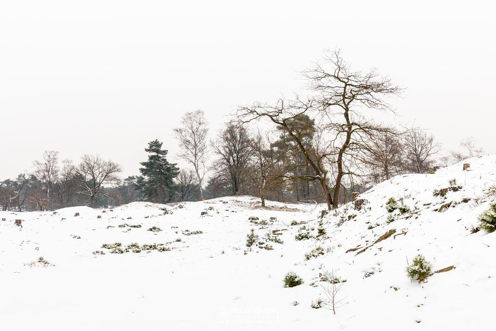 Photo in Landscape #boshuizerbergen #boschhuizerbergen #limburg #venray #nature #noordlimburg #netherlands #snow #winter #trees #forest