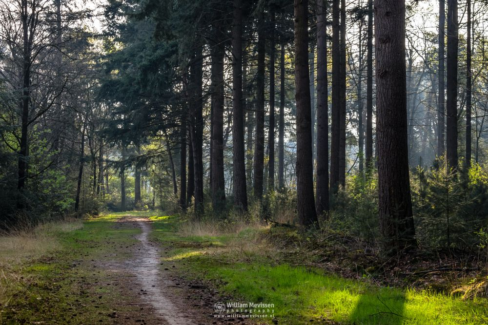 Photo in Nature #venray #limburg #noord-limburg #merselo #nature #trees #ballonzuilbossen #ballonzuil #netherlands #forest #spring #mist #sunrise #woods #path #light #mood