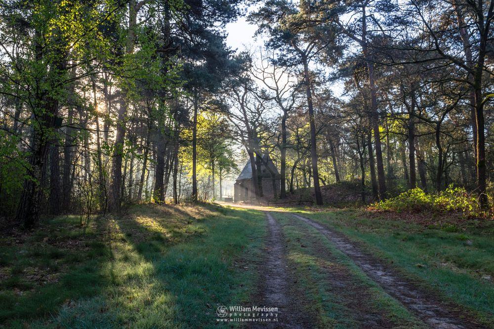 Photo in Nature #geijsteren #venray #oostrum #landgoed geijsteren #limburg #noord-limburg #nature #forest #path #mood #mist #chapel #rays #willibrorduskapel