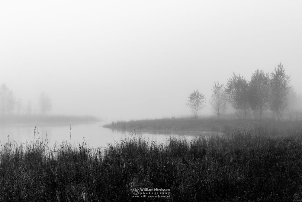 Photo in Black and White #bergerheide #maasduinen #limburg #noord-limburg #nieuw-bergen #bergen #nature #blackandwhite #fen #mood #serene #autumn #mist #fog #light