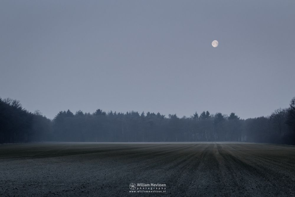 Photo in Landscape #venray #limburg #noord-limburg #ballonzuilbossen #merselo #trees #forest #winter #mist #light #mood #farmland