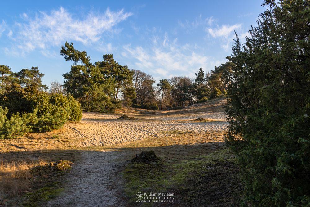Photo in Landscape #boshuizerbergen #boschhuizerbergen #limburg #noord-limburg #venray #nature #woods #forest #netherlands #pine #spring #sand #dunes #juniper