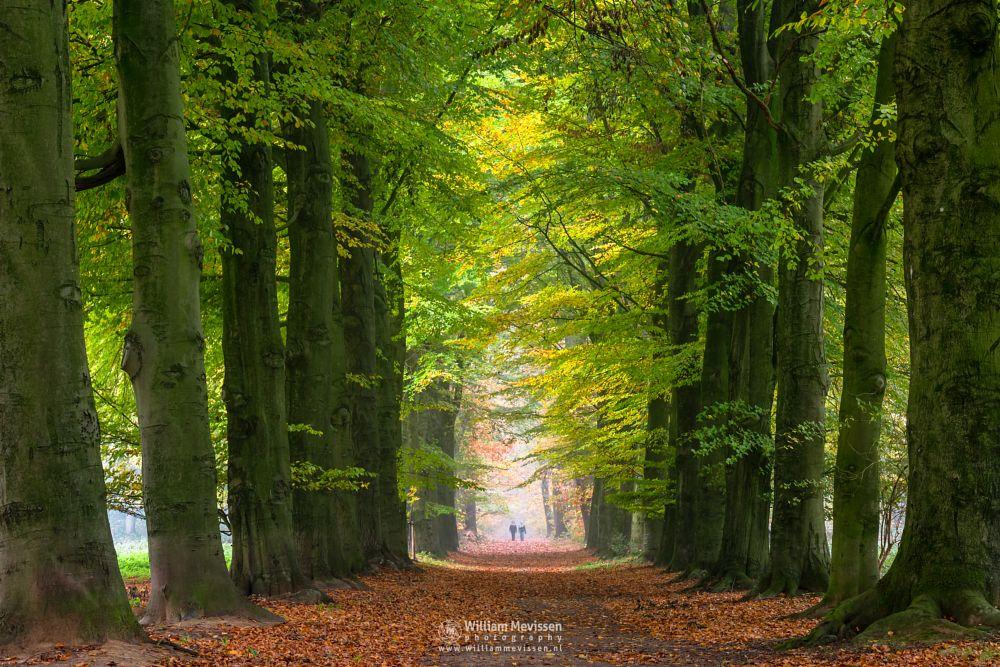 Photo in Random #limburg #geijsteren #venray #oostrum #landgoedgeijsteren #woods #forest #autumn #beech #lane #trees #beeches #noord-limburg