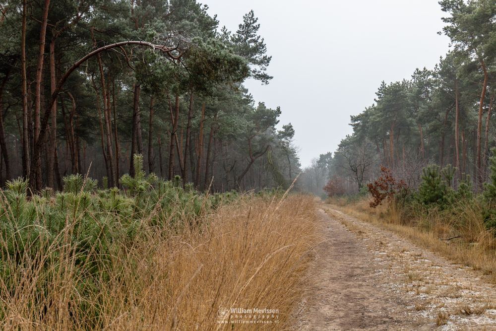 Photo in Nature #boshuizerbergen #limburg #noord-limburg #venray #nature #forest #landgoed geijsteren #geijsteren #netherlands #frost #path #oostrum