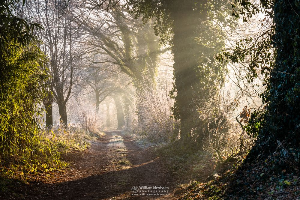 Photo in Nature #geijsteren #venray #oostrum #landgoed geijsteren #woods #limburg #nature #noord-limburg #trees #path #mood #mist #light #rays