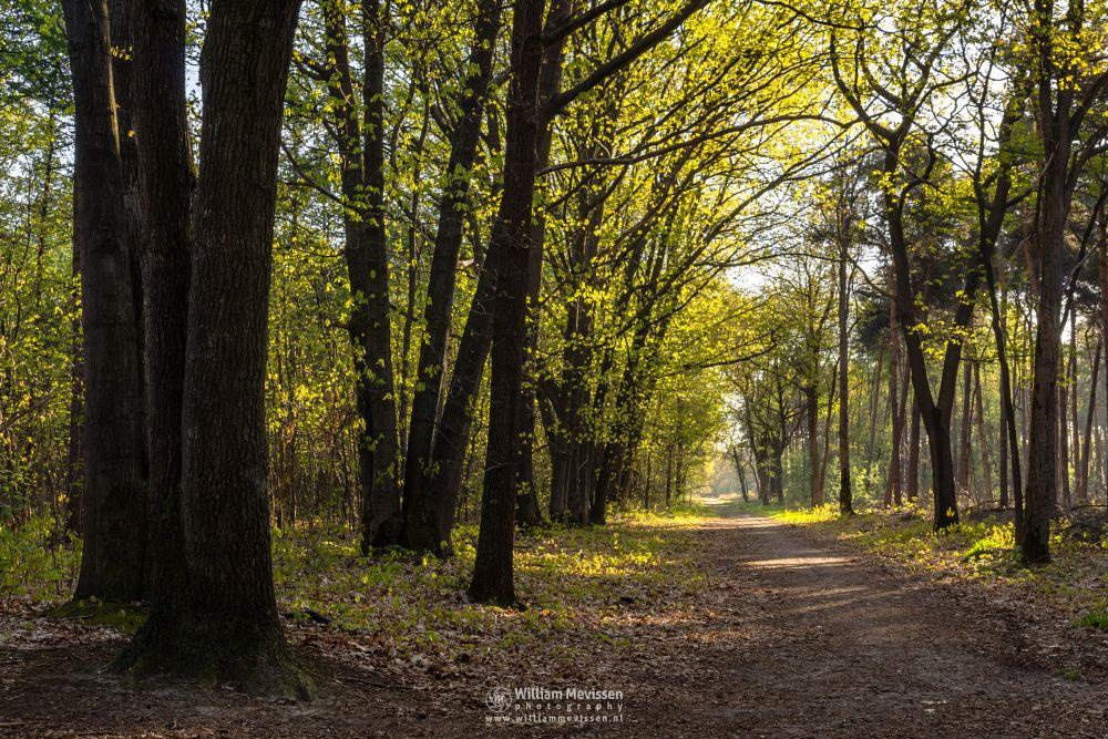 Photo in Nature #boschhuizen #limburg #noord-limburg #venray #nature #forest #woods #netherlands #spring #path #trees #fresh #green