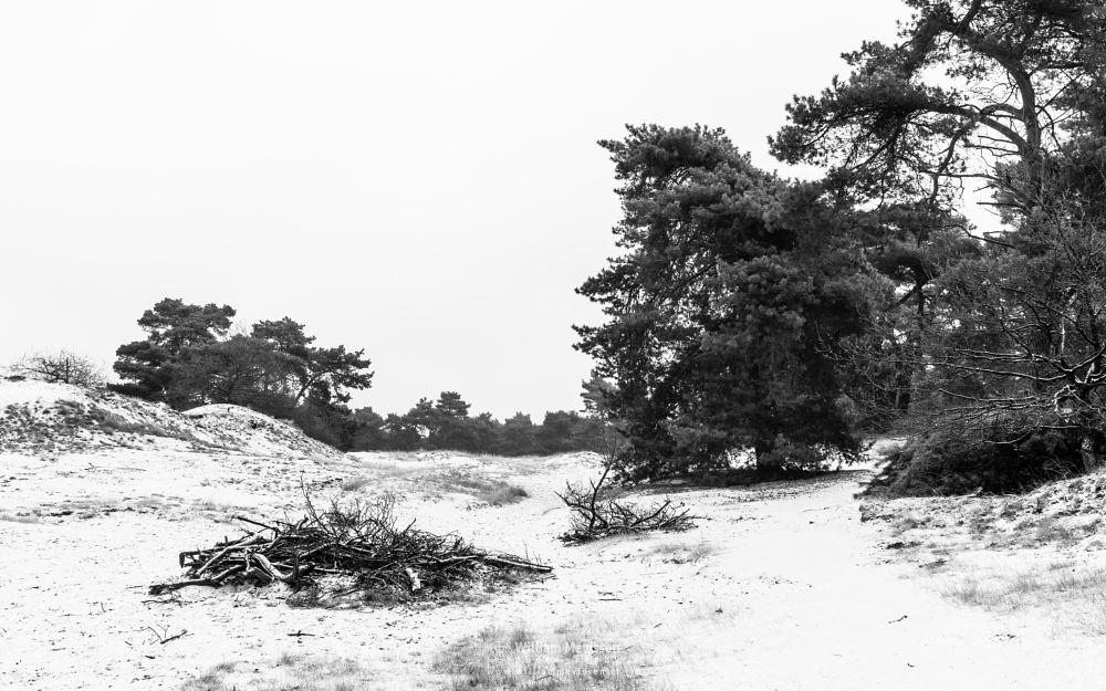 Photo in Black and White #boshuizerbergen #boschhuizerbergen #limburg #noord-limburg #venray #nature #forest #netherlands #pine #winter #snow #juniper #sanddunes