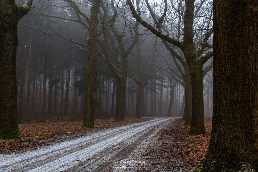 Photo in Nature #mist #annaterrein #limburg #venray #noord-limburg #nature #forest #trees #path #snow #frost