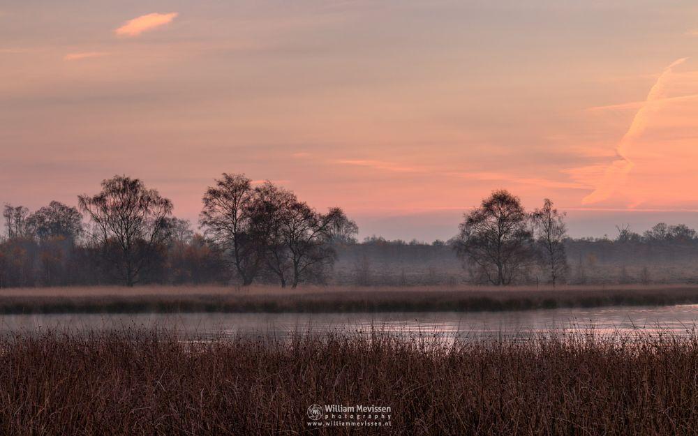 Photo in Landscape #forest #heathland #maasduinen #limburg #noord-limburg #wellerlooi #bergen #sunrise #nature #light #trees #mist #hamert #dehamert #pikmeeuwenwater #fen