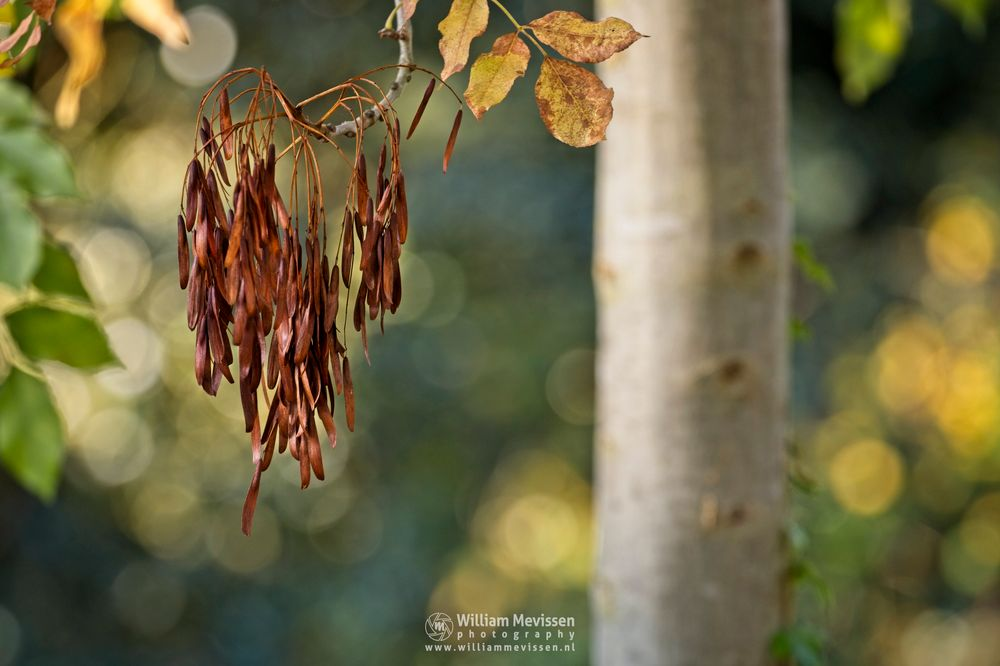 Photo in Nature #garden #autumn #colors #seeds #foliage