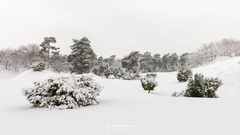 Photo in Random #boshuizerbergen #nature #boschhuizerbergen #woods #juniper #thickets #snow #dunes #venray #winterlandscape #winter #forest #limburg #noord-limburg