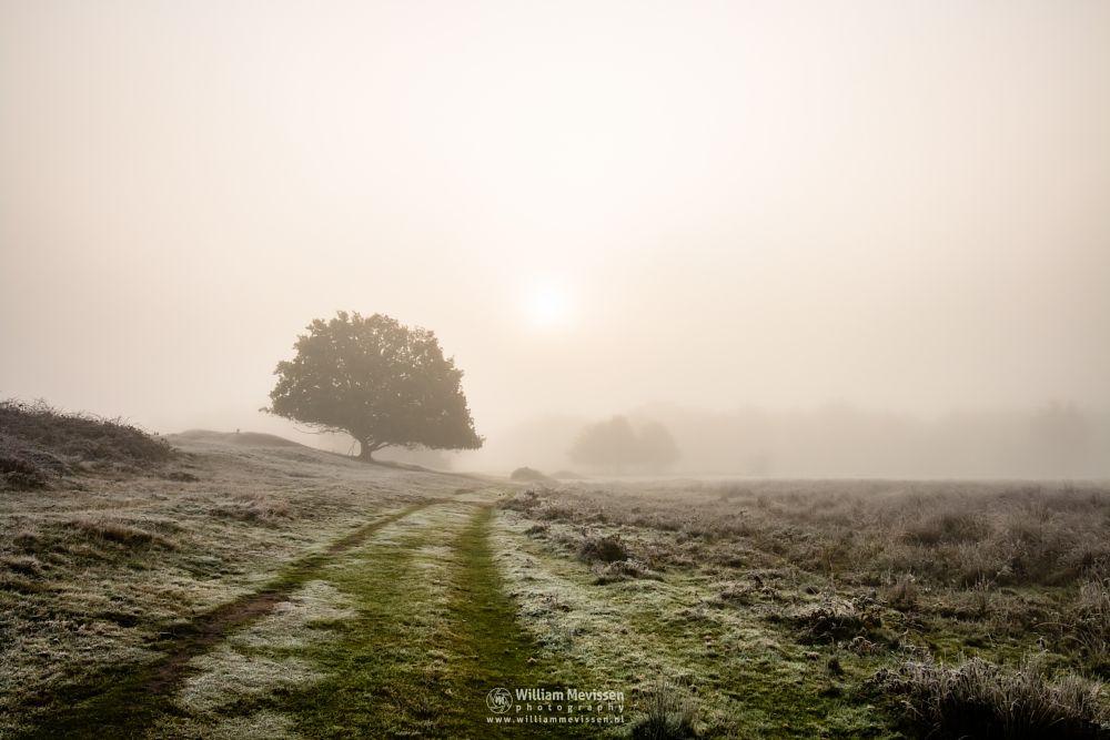 Photo in Landscape #bergerheide #maasduinen #limburg #noord-limburg #nature #light #autumn #tree #sunrise #frost #bergen #nieuw-bergen