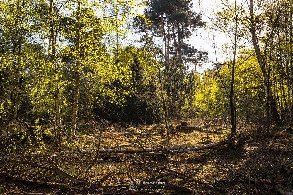 Photo in Nature #boshuizerbergen #boschhuizerbergen #limburg #noord-limburg #venray #nature #woods #forest #netherlands #pine #spring #trees #fresh #green