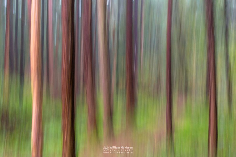 Photo in Abstract #trees #forest #limburg #noord-limburg #venray #annaterrein #nature #autumn #mood #light